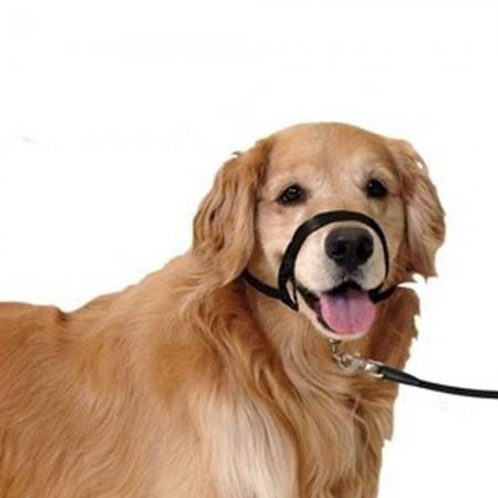 Bozal collar educador para perro talla S