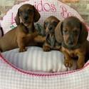 Cunas y colchonetas para perros