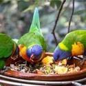 Comida para pájaros