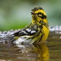 Salud e higiene para aves