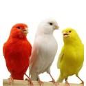 Suplementos y vitaminas para aves
