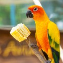 Snacks y golosinas para aves