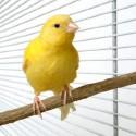 Jaulas y complementos para aves